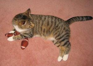 Brady With Football Cat Toys