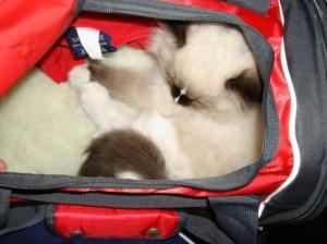 Charlie in Carrier 10-15-09