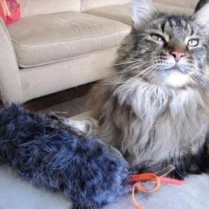 Mystery Huskyplus Catnip Love Sock