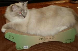Trigg on The Imperial Cat Zen Lounger