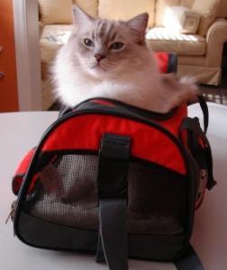 Trigg in Sherpa Bag