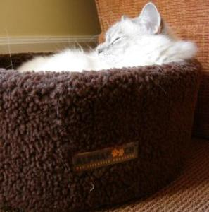 Trigg in the Siesta Cat Bowl