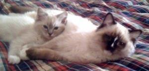Trigg and Charlie at the Lake 2009