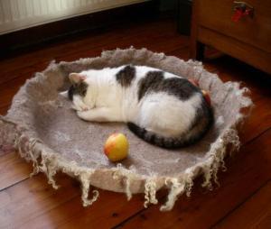 Katzenschale