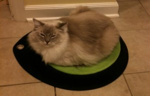 Trigg on Crater Dot Cat Bed 12/21/10