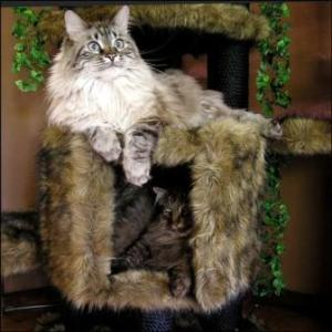 Unique Cat Furniture
