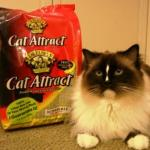 Dr. Elsey's Cat Attract Cat Litter – Floppycats.com Review
