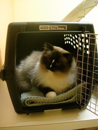 Charlie in the Double Door Deluxe® Pet Carrier