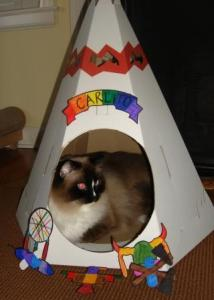 Charlie in the Loyal Luxe Native American Teepee