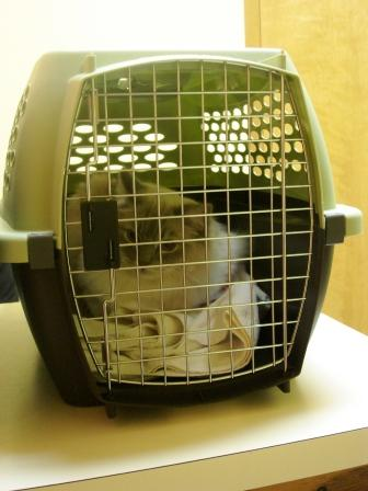 Trigg in the Kennel Cab® Fashion Pet Carrier