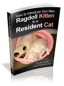 How To Introduce Your Ragdoll Kitten to a Resident Cat