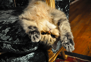 Photo of Marmalade - Kevin's Cat