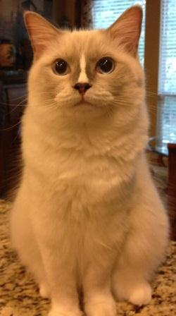 J-Cat is a blue mitted with blaze boy Owned and Cherished by Barbie Heinen!