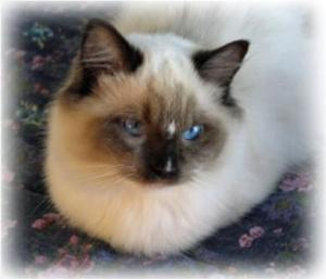 Meriwidoz Stutz Bearcat