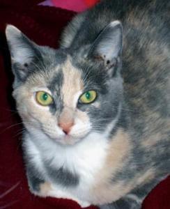 Wendy's Cat, Hazel-Marie