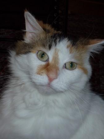 Wendy's Cat, Angel