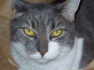 Wendy's Cat, Jessie