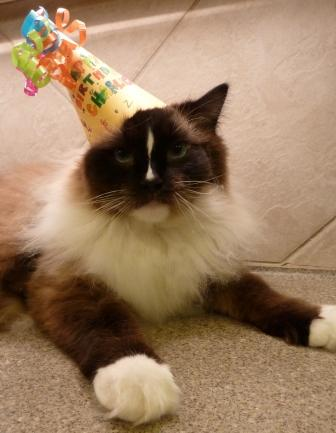 Happy 2nd Birthday Charlie