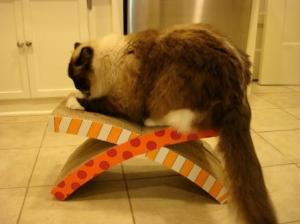 Charlie on Petstages Easy Life Hammock and Scratcher