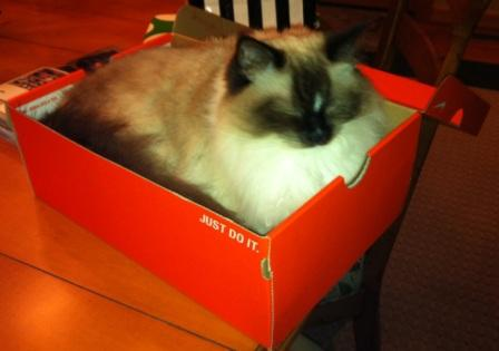 Maddie loves this box at the Lake! 8-16-11