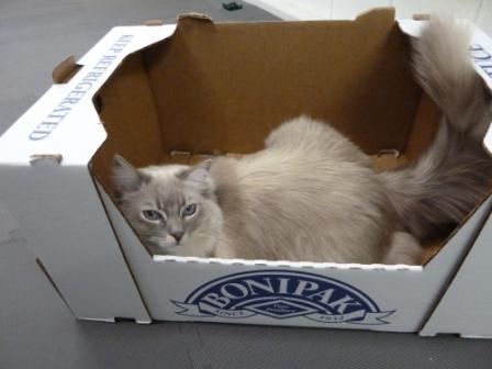 Trigg in a Costco Box