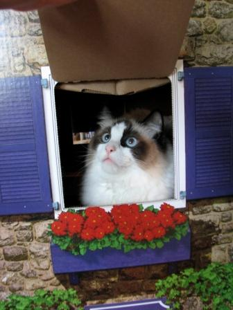 Simon in a Box, owned by Pamela