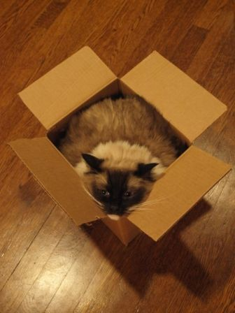 Caymus in a box
