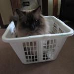 Cooper in a Laundry Basket loved by Jeff Jancek