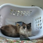 Emily in a Laundry Basket - loved by Lynn Running