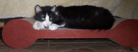 Mulan on the Brawny Cat Scratch'n Slumber Comfort Padlets