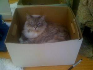 photo credit Sue Widome; cat, Jeff