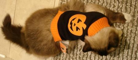 Charlie in Kmart Cat Halloween Costume