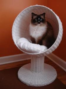 Charlie in The Refined Feline Kitty Ball Bed