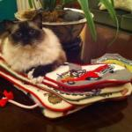 Do You Have a Christmas Stocking for Your Cat?