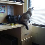 Can You Take Your Cat to The Office?