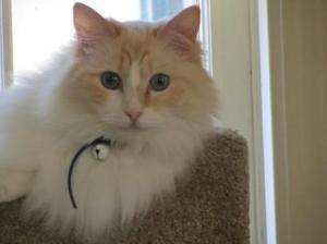 Murphy in his cat tree