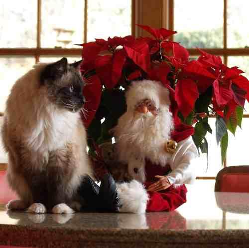 Rags and Santa - Christmas 2007