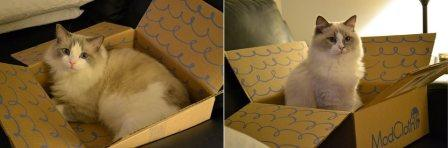 Brothers Playing in a Box