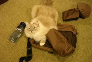 Trigg with the Solvit Products HomeAway™ Travel Organizer Kit