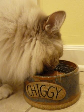 Chiggy eating out of his Chiggy Bowl