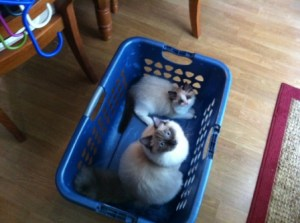 Enzo and Nikko helping me do wash