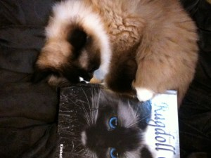 Charlie with The Friendly Floppy Ragdoll Cat Book
