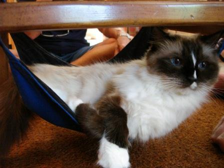 Murphy in the Kitty Cradle