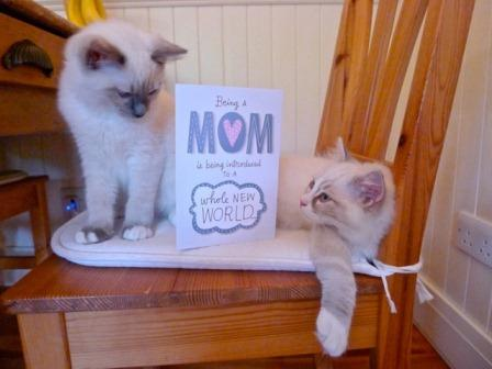 Yes I got a Mother's Day card from the boys!