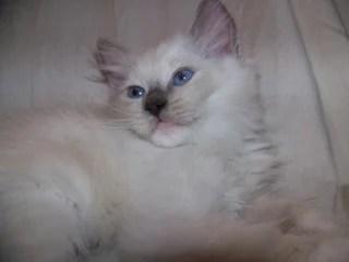 Lady Beatrix at 8 weeks