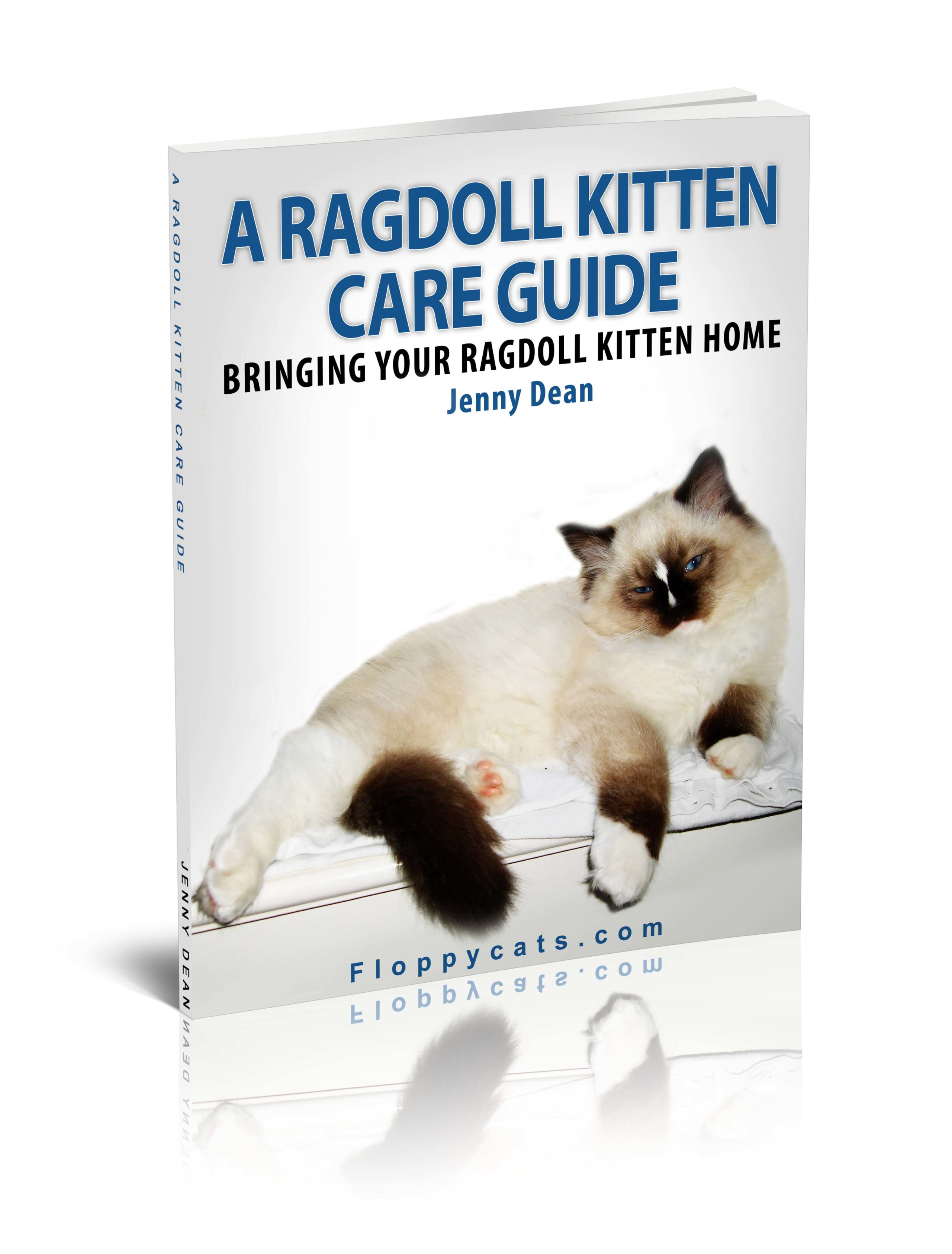 a ragdoll kitten care guide bringing your ragdoll kitten home. Black Bedroom Furniture Sets. Home Design Ideas