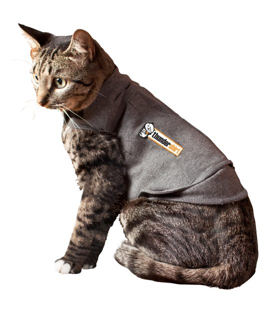Thundershirt Giveaway on Floppycats