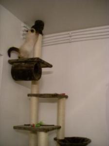 rudi on his climbing tree