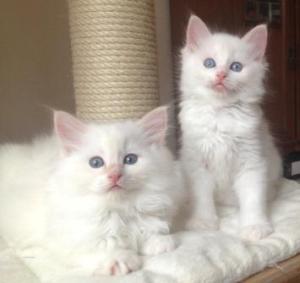 Einstein (left) and Elvis (right)