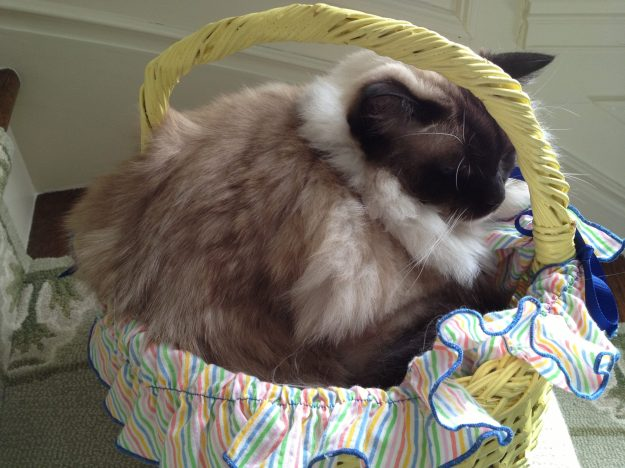 Caymus in an Easter Basket